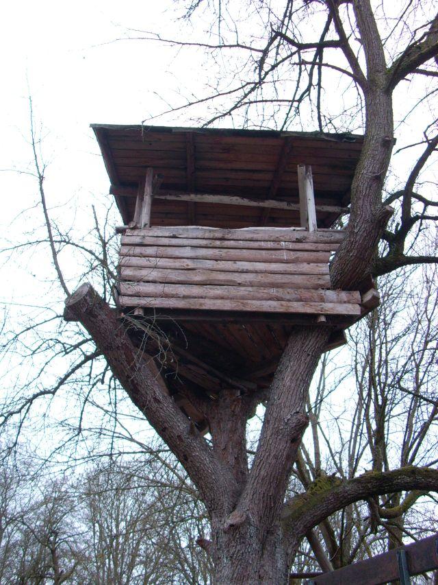 baumhütte